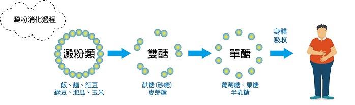 醣類攝取的熱量轉換流程