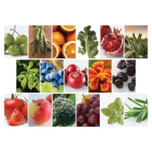 紐崔萊DoubleX的100種植物濃縮素