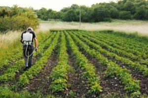 一般農業都是使用化學肥料、農藥