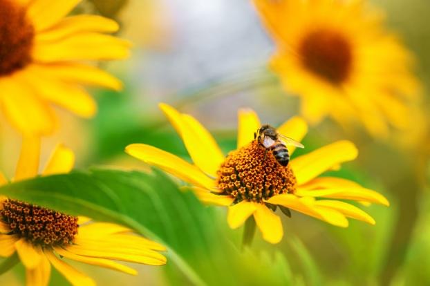 植物會藉由蜜蜂來進行授粉